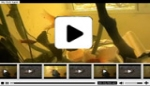 H.264 .f4v Xml Video player V3